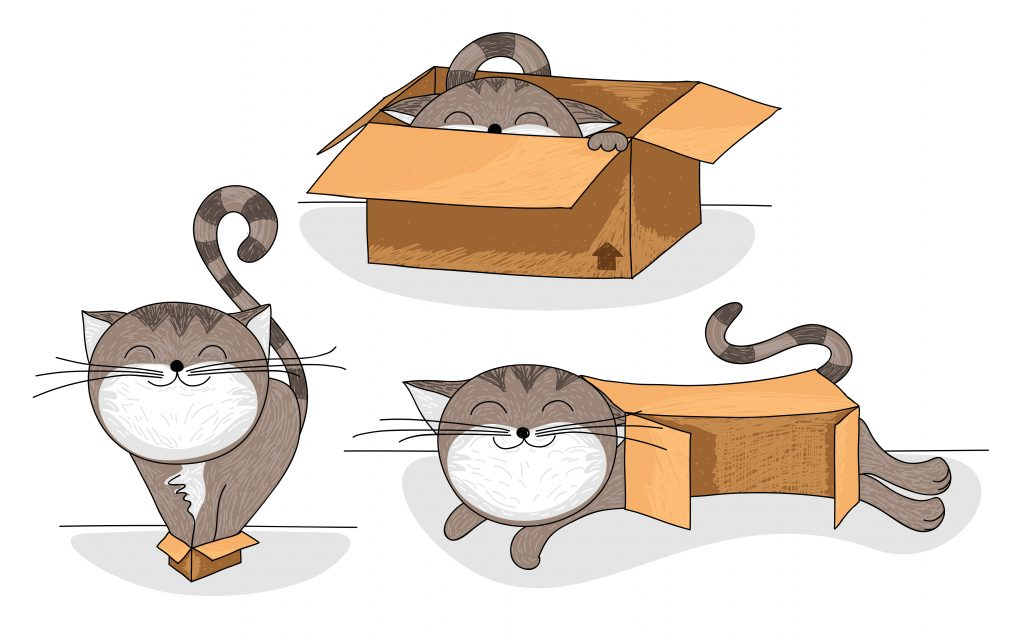 images of a cute cat in a box
